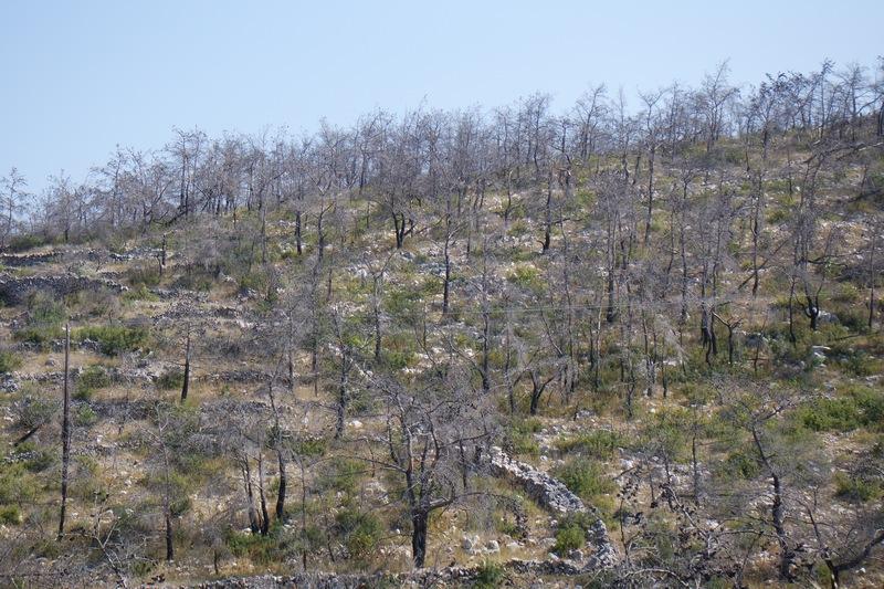 Sakız orman yangını